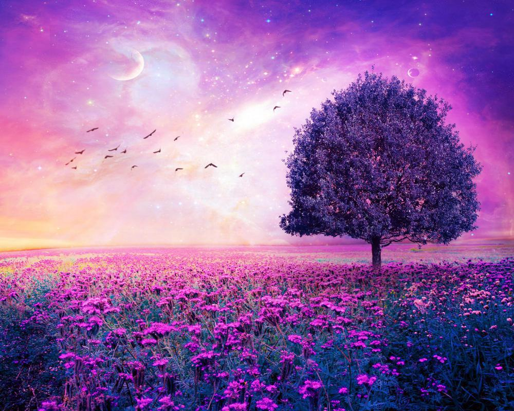 paysage arbre purple magnifique